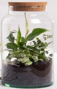 Halboffene Terrarium Flasche Glas 7L Pflanzen Deko Gewächs Haus Blumen Kork Haus