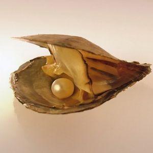 Pearl Oyster Natural Fashion Austern mit runden Perlen Glatte Geschenke 6-8mm