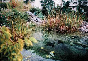 Teichpflanzen XL - Set, mindestens 13 Sorten Teich