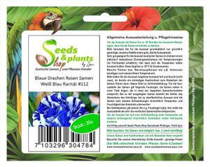 20x Weiß Blaue Drachen Rosen Blumen Pflanzen - Samen #112