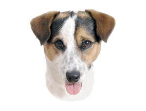 Nobby Aufkleber Jack Russel Terrier 120 x 150 mm; 2er Set