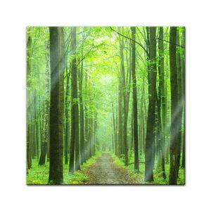 Glasbild - Waldweg, Größe:50 x 50 cm