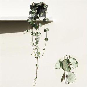Ceropegia woodii Silver Glory 20-24 cm - Leuchterblume - Grünpflanze - Zimmerpflanze