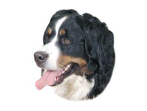Nobby Aufkleber Berner Sennenhund 120 x 150 mm; 2er Set