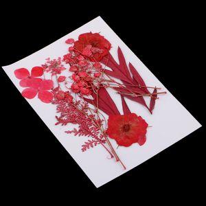 Getrocknete Blumen Trocken Blätter Echte Blume Blüten für Diy Kunsthandwerk