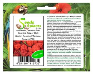 20x Carolina Reaper Chili Garten Gemüse Pflanzen – Samen #240