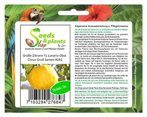 5x Große Zitrone F1 Lunario Citrus Obst Pflanzen - Samen #241
