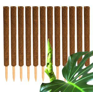 12x Kokos Pflanzstab 60 cm Rankstab Rankhilfe
