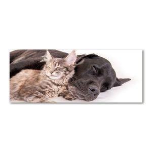 Tulup® Leinwandbild - 125x50 cm - Wandkunst - Drucke auf Leinwand - Leinwanddruck  - Tiere - Braun - Hund Katze
