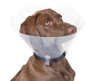 Hunde-Halskrause 30,00 cm, 47 - 57 cm