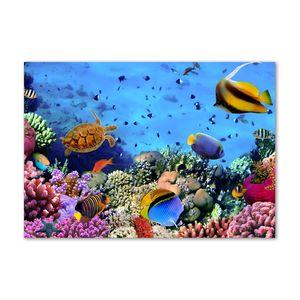 Tulup® Acrylglas - Wandkunst - 100 x70 cm - Bild auf Plexiglas® Deko Wandbild hinter Kunststoff / Acrylglas Bild - Dekorative Wand für Küche & Wohnzimmer   - Tiere - Korallenriff - Mehrfarbig