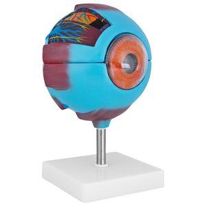 Anatomie Modell Auge des Menschen Anatomiemodell menschlicher Körper Anatomisches Menschliches Augenmodell menschliche Modelle 6fache Vergrößerung 7-teilig medmod