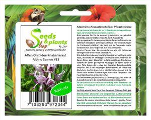 25x Affen Orchidee Knabenkraut Albino Zimmerpflanzen Samen #35