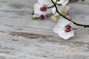 4x Tischsets Motiv 'Orchidee' / abwaschbar