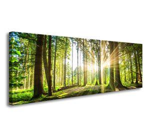120 x 40 cm Bild auf Leinwand Wald im Gegenlicht 5730-VKF deutsche Marke und Lager  -   fertig gerahmt , exklusive Markenware von Visario