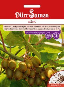 Dürr Samen - Kiwi