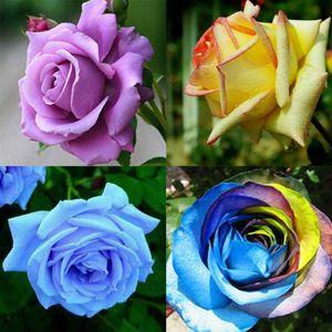 100 X gemischt Stil seltene Pflanzen mehrfarbige Rose Pfingstrose Blumensamen