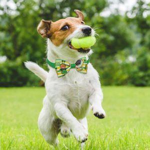 Irish Festival Haustier Dekoration Katze und Hund Party Dekoration Fliege St. Patrick's ZZT210115004