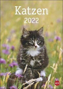Katzen 2022