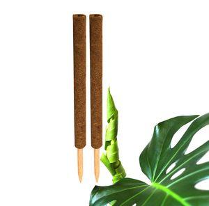 2x Kokos Pflanzstab 60 cm Rankstab Rankhilfe
