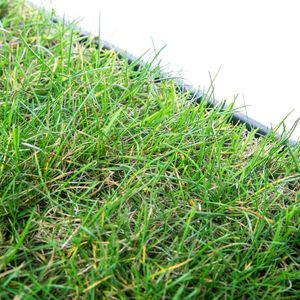 Katzengras Katzenwiese Hundewiese echter Rasen ca 60x40 cm inkl Kunststoffschale