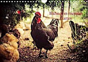 Hühner in meinem Garten (Wandkalender 2021 DIN A4 quer)