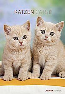 Katzen / Cats 2020