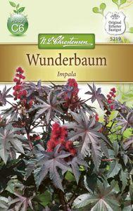 Chrestensen Wunderbaum 'Impala