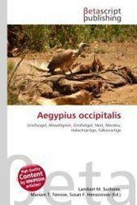 Aegypius occipitalis