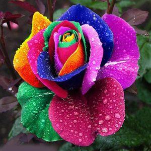100 stücke Bunte Regenbogen Blumensamen Garten Pflanzen Multi-color Einzigartige