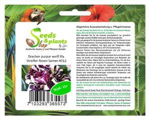 15x Drachen purpur Weiß Lila Streifen Rosen Pflanzen - Samen #312