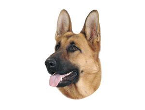 Nobby Aufkleber Deutscher Schäferhund Dunkel 120 x 150 mm, 2er Set