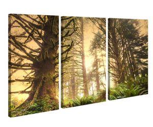 Leinwandbild 3 Tlg Dschungel Regenwald Wald Sonne Leinwand Bild Bilder canvas Holz fertig gerahmt 9V1239, 3 tlg BxH:90x60cm (3Stk  30x 60cm)