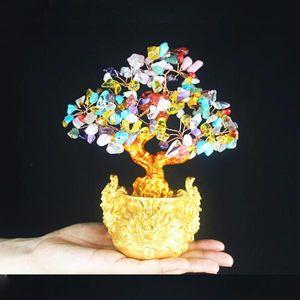 1 Stück Geldbaum Farbe Bunte b