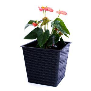 Blumenkübel quadratisch, konisch Polyrattan 26x26x24cm schwarz.