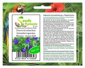 15x Clitoria ternatea blue Schmetterlingserbse Pflanzen - Samen ID26