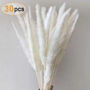 Pampasgras, Natürliche Pampasgras Getrocknet Pampas Gras Phragmites Trockenblumen Blumenstrauß Deko