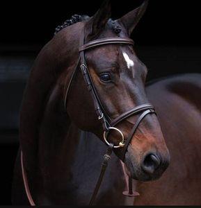 Horseware Amigo Bridle - brown, Größe:Pony (S)
