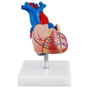 Originalgetreues Herz Modell von MedMod
