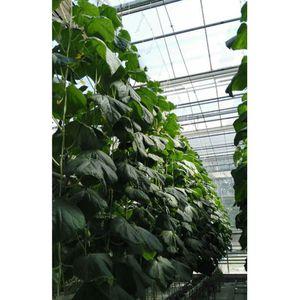20 Stück Tomatenhaken Gemüse Stützklemmen Verhindern, Dass Tomaten Einklemmen Weiß Modern