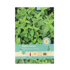 100 Samen Echte Pfefferminze Minze Winterhart mentha piperita Tee- und Heilkraut Kräutersamen Garten Saatgut Sämereien