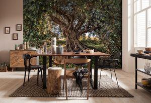 "Komar Fototapete ""Olive Tree"", grün/braun, Olivenbaum, 368 x 254 cm"