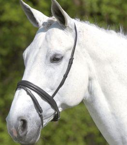 STAR Englisch kombiniertes Reithalfter, schwarz, Pony