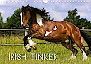 Irish Tinker (Wandkalender 2021 DIN A4 quer)