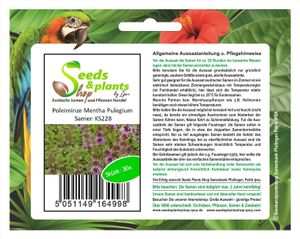 30x Poleiminze Mentha Pulegium Kräutersamen Samen Saatgut Neuheit KS228
