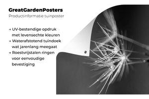 Gartenposter - Löwenzahnsamen mit frühem Tau bedeckt - schwarz und weiß - 100x100 cm
