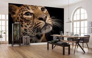 "Komar Vlies Fototapete ""Javan Leopard"" - Größe: 400 x 280 cm (Breite x Höhe), 8 Bahnen"