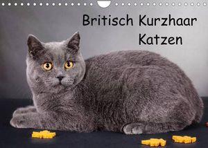 Britisch Kurzhaar Katzen (Wandkalender 2022 DIN A4 quer)
