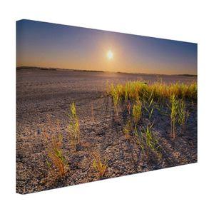 Leinwand Bilder - 60x40 cm - Trockene Wüste mit Pflanzen Fotodruck  - Modernes Wandbilder - Natur