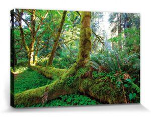 Wälder Poster Leinwandbild Auf Keilrahmen - Riesen-Wurzeln Im Regenwald (80 x 120 cm)